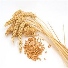Proteína de trigo hidrolisada